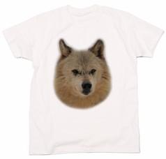 シンリンオオカミのキナコ